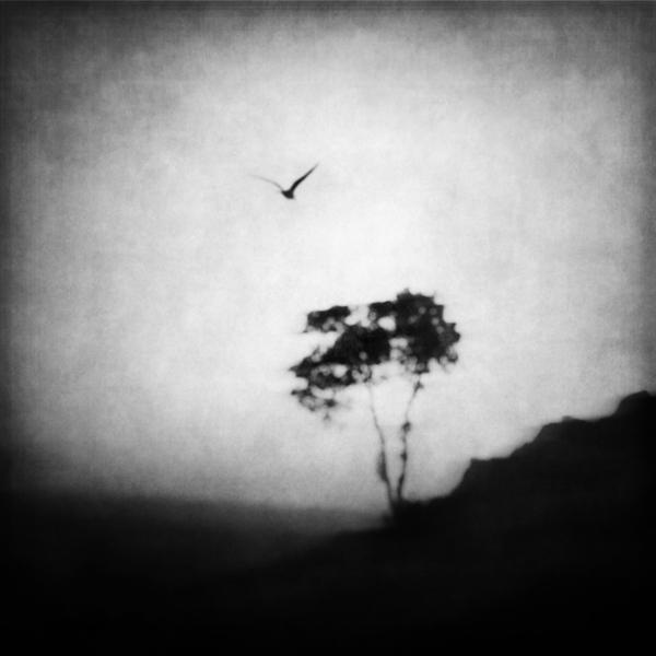 the-tree-mag_zewar-fadhil_150.jpg