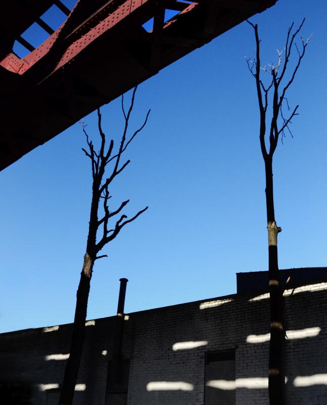 the-tree-mag_26-states-by-jack-davison_10.jpg