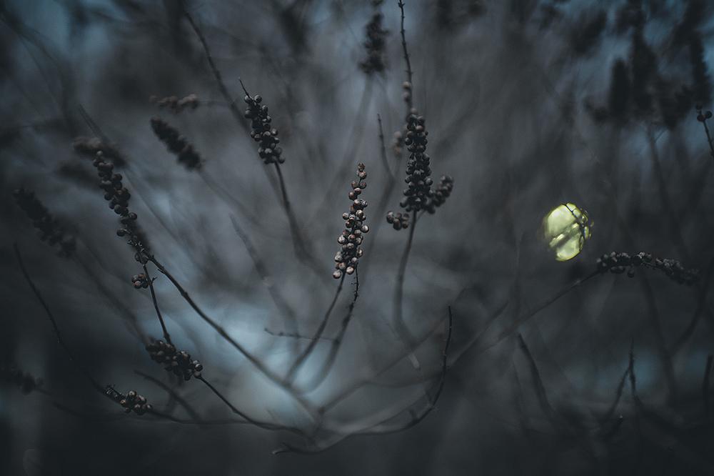 the-tree-mag_rachel-bellinsky_20.jpg