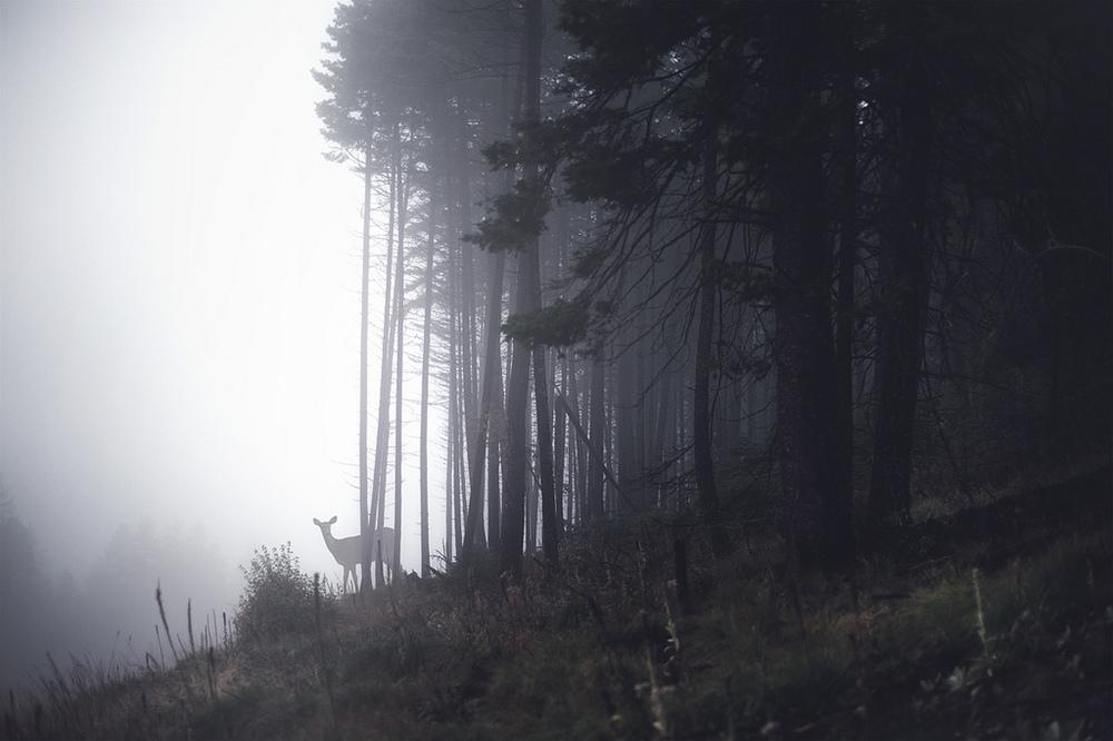the-tree-mag_rachel-bellinsky_180.jpg