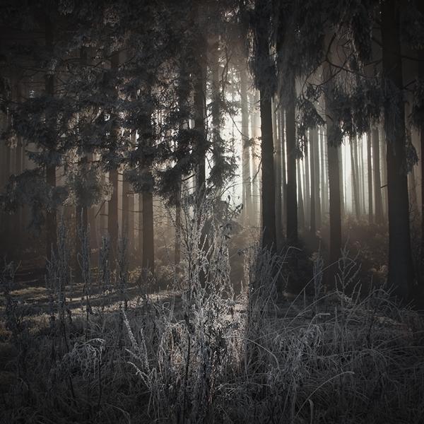the-tree-mag_jrgen-heckel_60.jpg