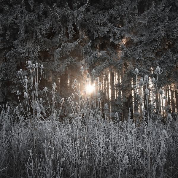 the-tree-mag_jrgen-heckel_50.jpg
