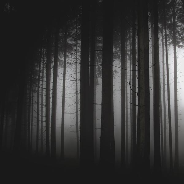the-tree-mag_jrgen-heckel_70.jpg