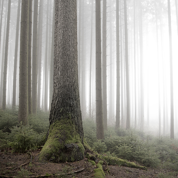 the-tree-mag_jrgen-heckel_80.jpg