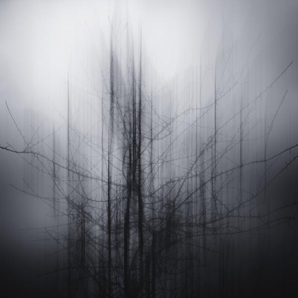 the-tree-mag_jrgen-heckel_100.jpg