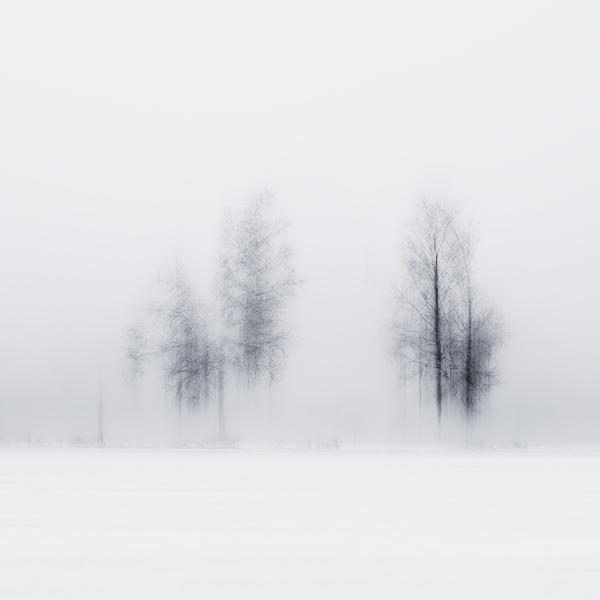 the-tree-mag_jrgen-heckel_110.jpg