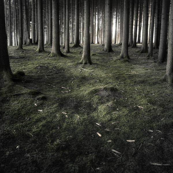 the-tree-mag_jrgen-heckel_160.jpg