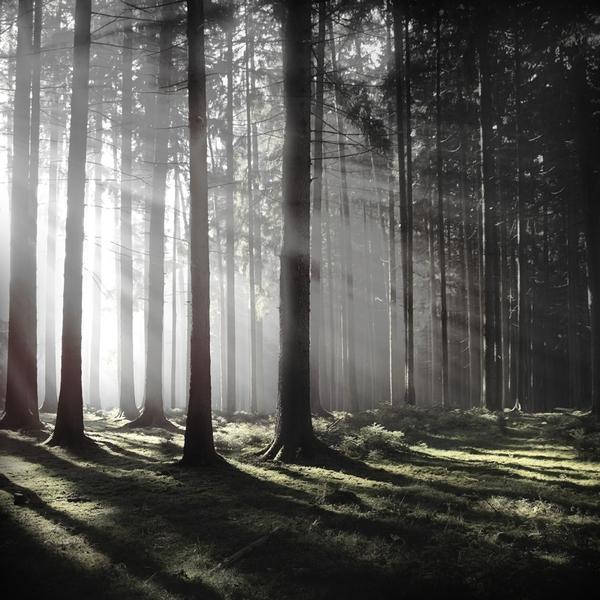 the-tree-mag_jrgen-heckel_170.jpg