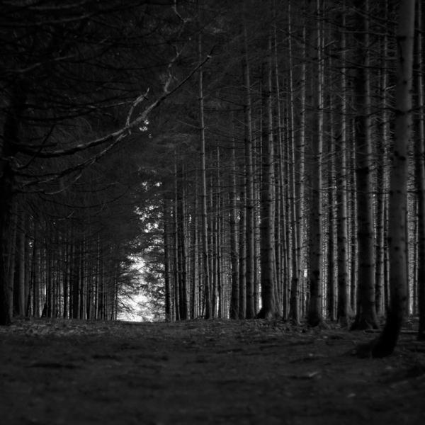 the-tree-mag_jrgen-heckel_200.jpg