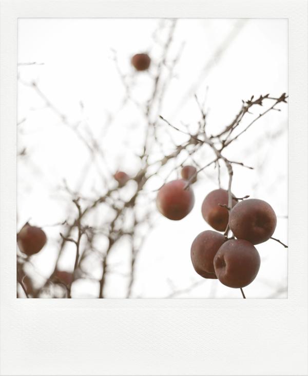 the-tree-mag_jrgen-heckel_290.jpg