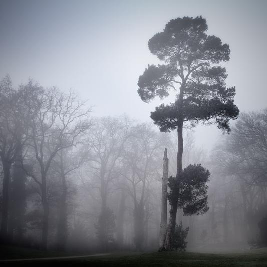 the-tree-mag_gundula-walz_160.jpg