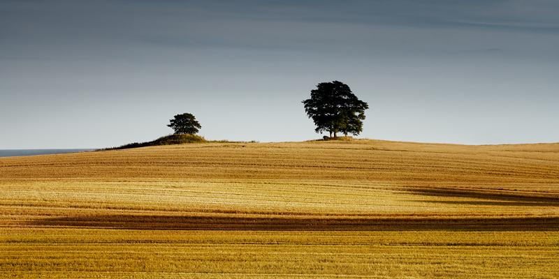 the-tree-mag_gundula-walz_250.jpg
