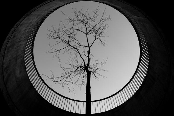 the-tree-mag_jaka-bulc_180.jpg
