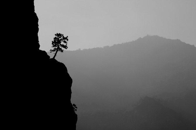 the-tree-mag_jaka-bulc_190.jpg