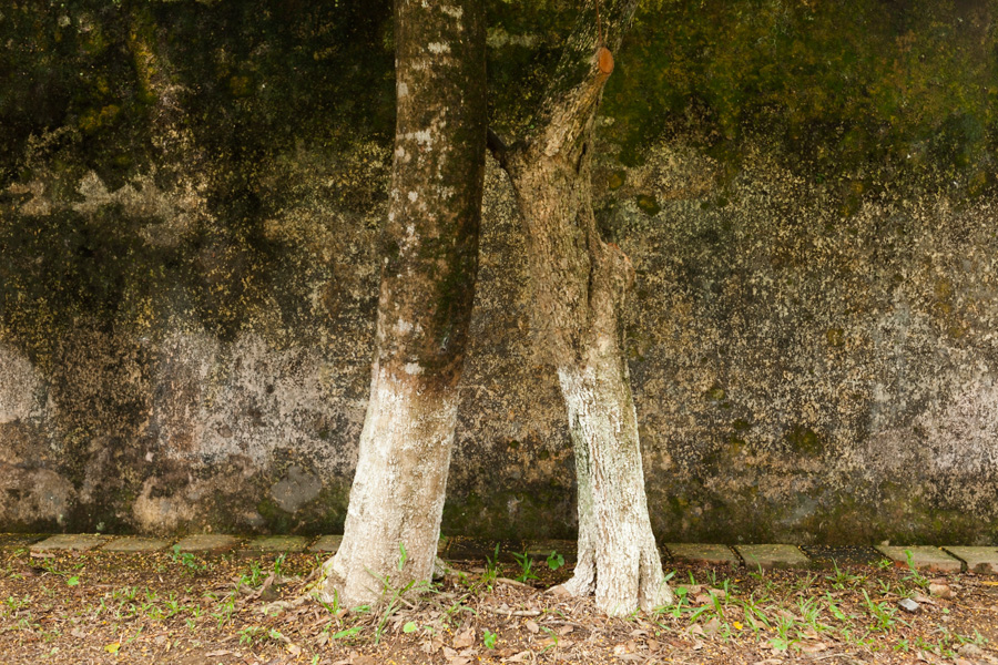 the-tree-mag_landscapes-by-rebecca-newman_150.jpg