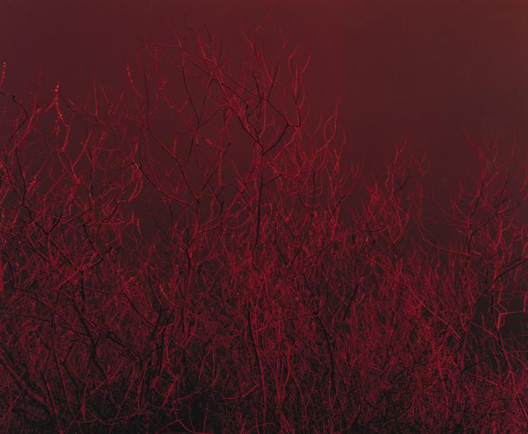 the-tree-mag_paul-seawright_30.jpg