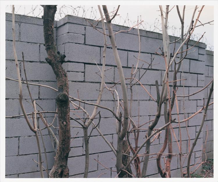 the-tree-mag_paul-seawright_50.jpg