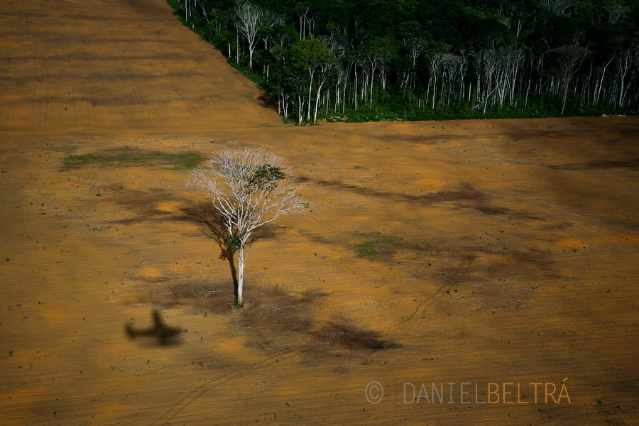 the-tree-mag_rainforests-by-daniel-beltra_100.jpg