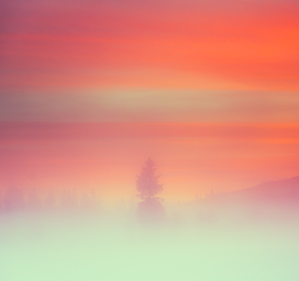 the-tree-mag_british-columbia-by-owen-perry_40.jpg