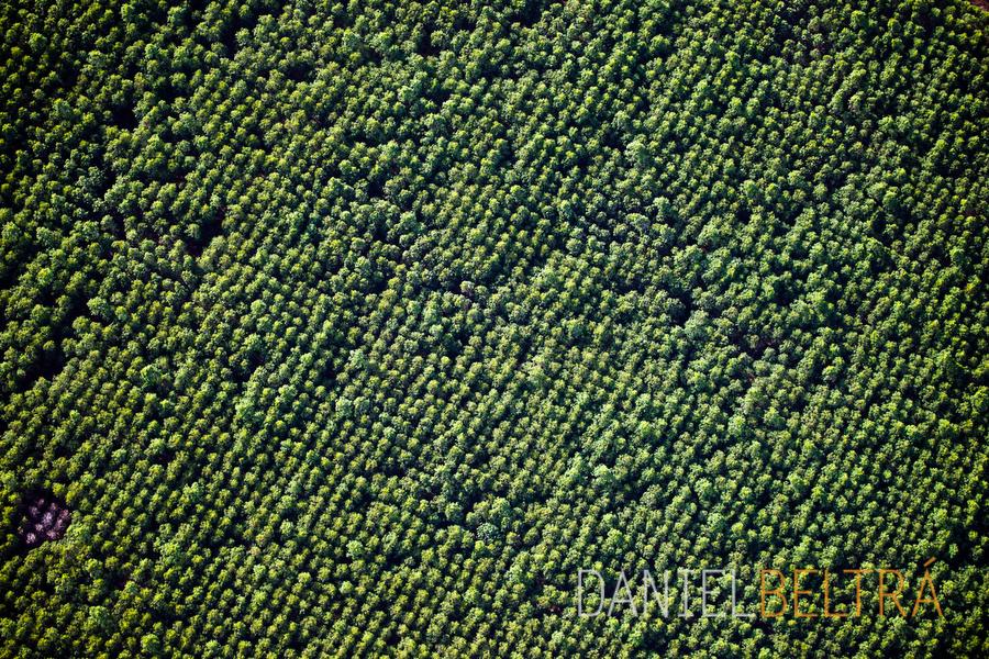 the-tree-mag_amazon-by-daniel-beltra_90.jpg