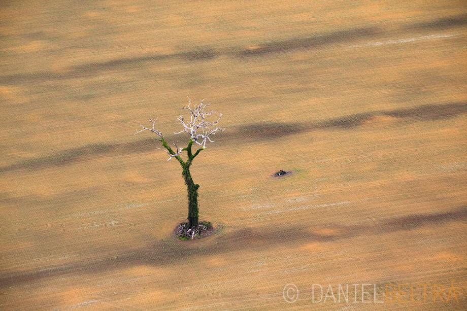 the-tree-mag_amazon-by-daniel-beltra_160.jpg