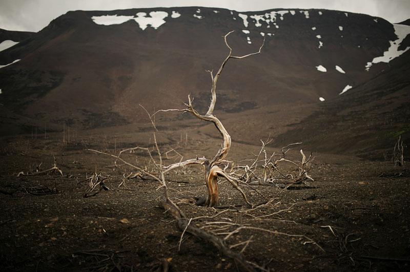 the-tree-mag_days-of-night-nights-of-day-by-elena-chernyshova_80+.jpg