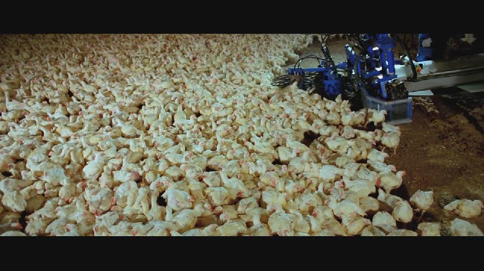 SAMSARA food sequence on Vimeo (1).jpg