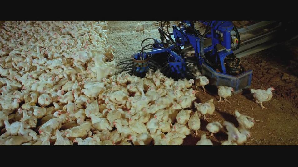 SAMSARA food sequence on Vimeo (2).jpg