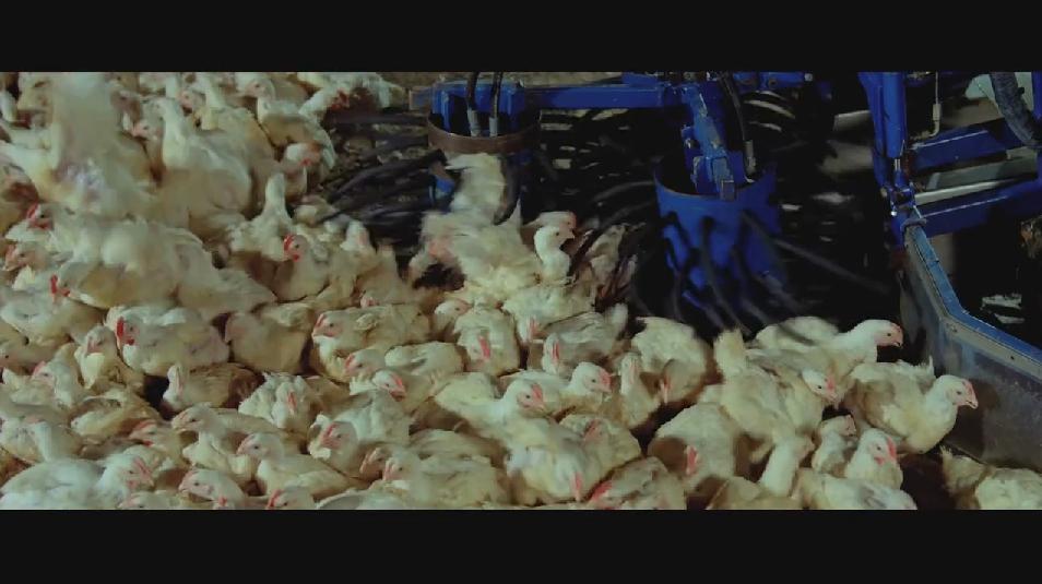 SAMSARA food sequence on Vimeo (3).jpg