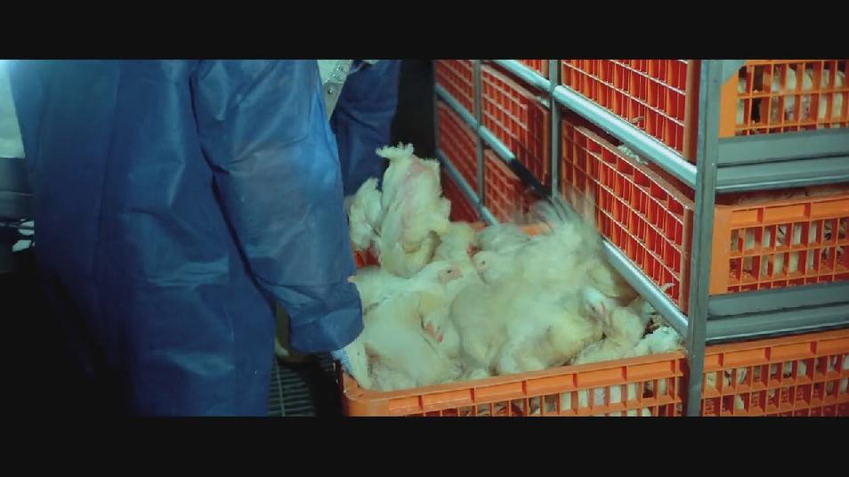 SAMSARA food sequence on Vimeo (4).jpg