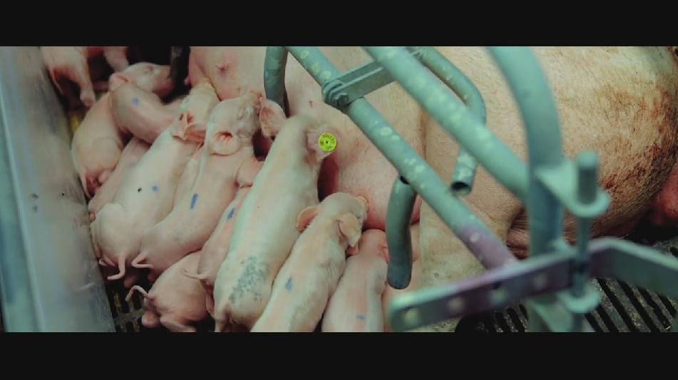 SAMSARA food sequence on Vimeo (14).jpg