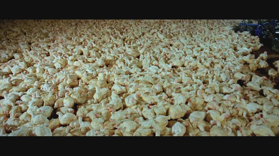 SAMSARA food sequence on Vimeo 0.jpg
