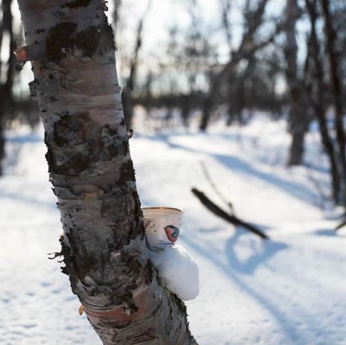 Lost in Sápmi.jpg