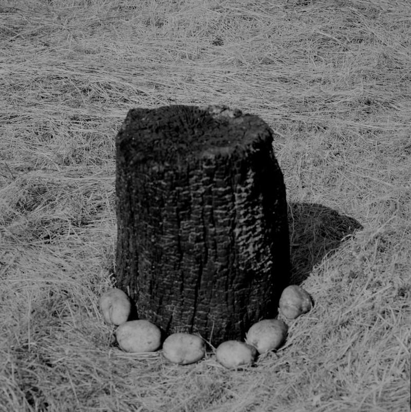 Margareta-Bergman_the-tree-mag_05.jpg