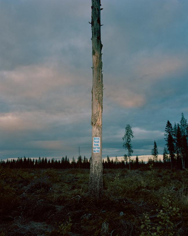 the-tree-mag-aapo-huhta-60.jpg