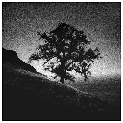 Baldtop Tree1.jpg