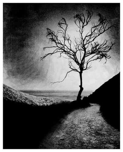 Harmon Tree.jpg
