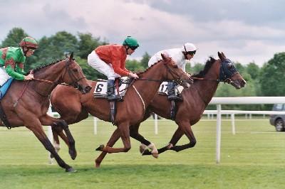 horse-racing-2.jpg