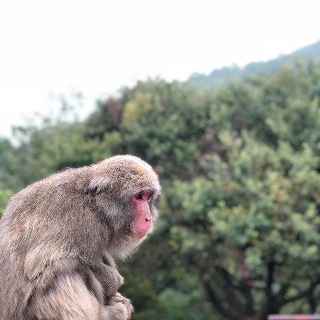 Monkeying around Japan with @kitkat_ko. Get it?!?!?!?!?!