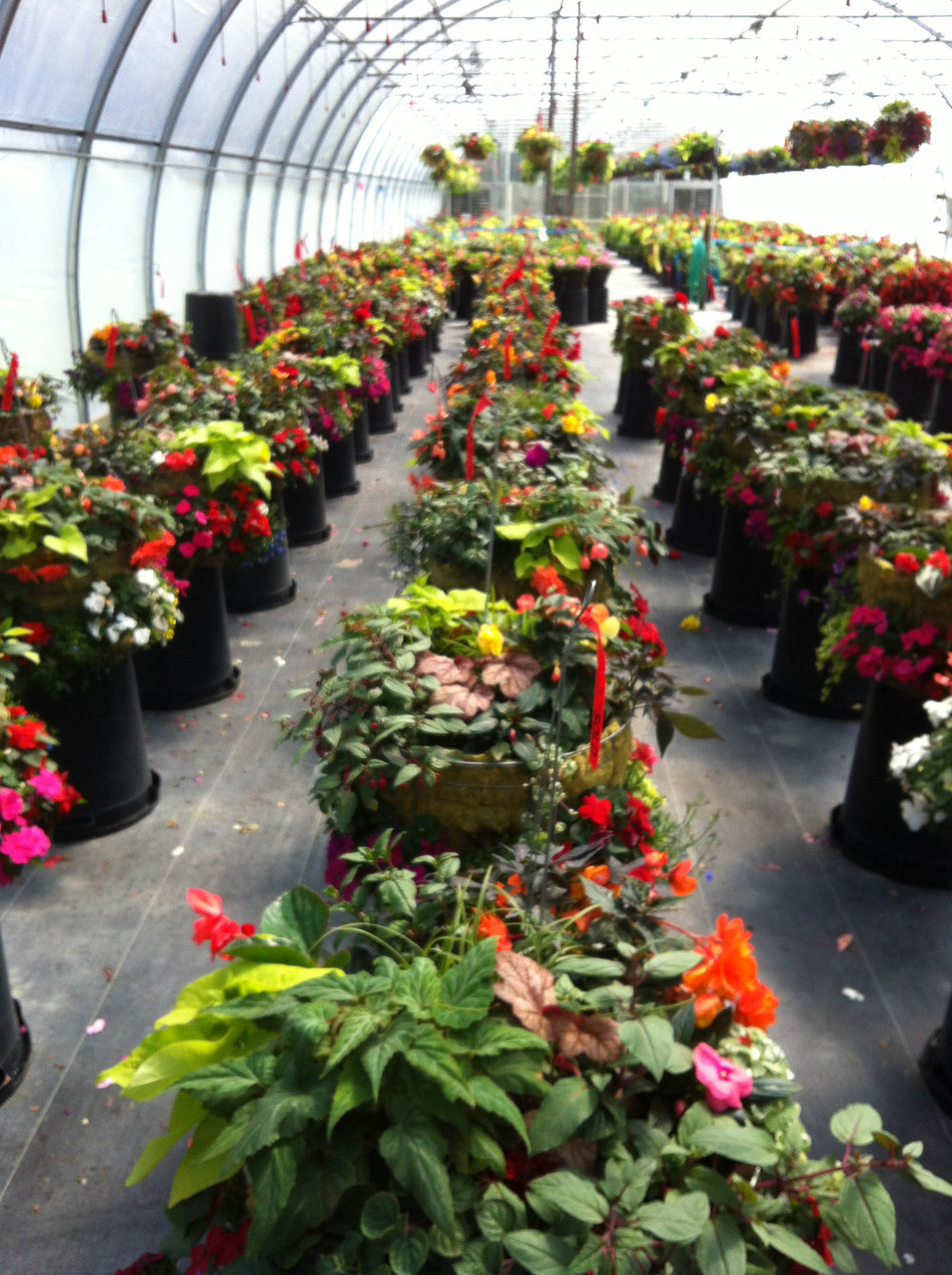 Flower Farm_Greenhouse1.jpg