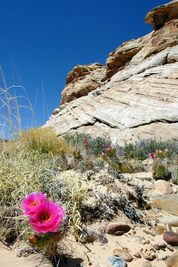 Green-Colorado-River-Trip 9.jpg