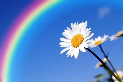 Rainbow-Daisy.jpg