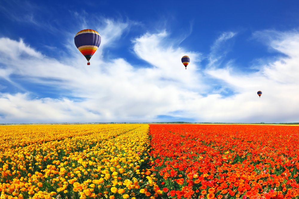 Hot-air-balloons-over-beautiful-flowers