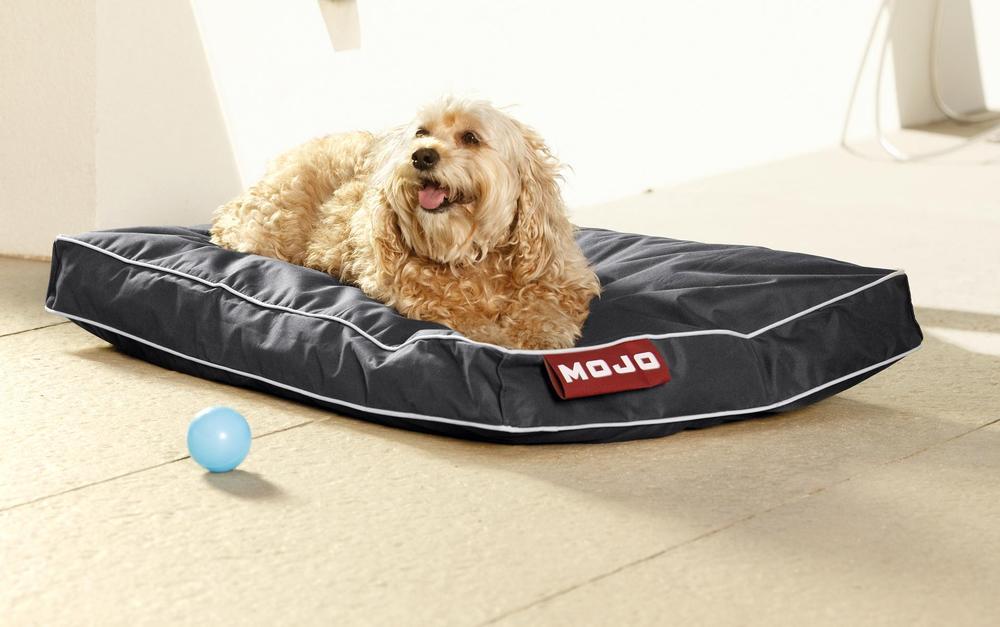 1-MOJO Doggie Lounge (NXPowerLite).jpg