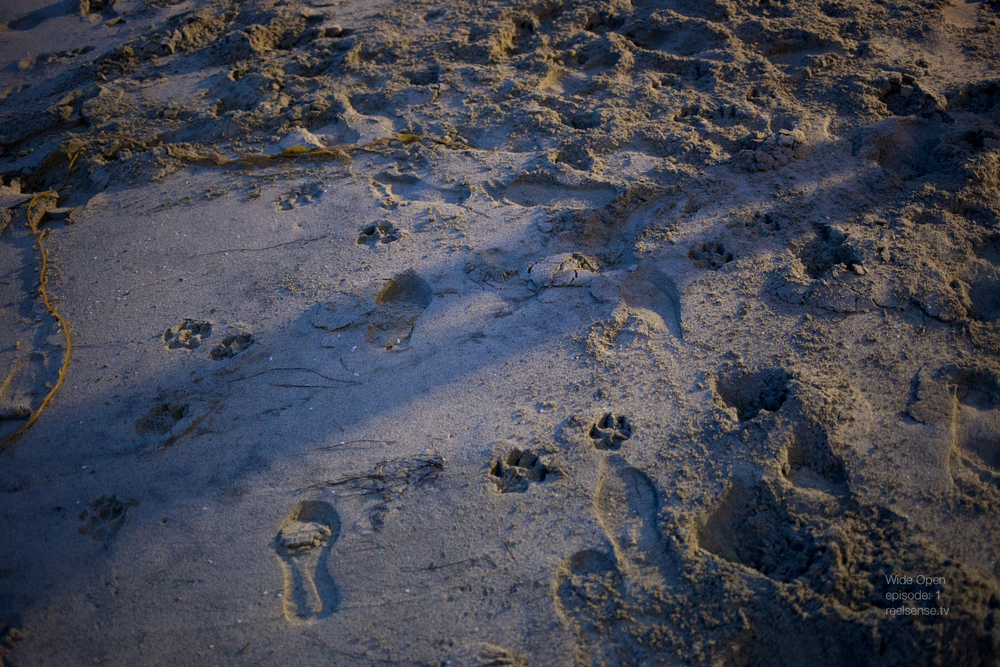 Laguna Beach - Foot prints & dog paw prints