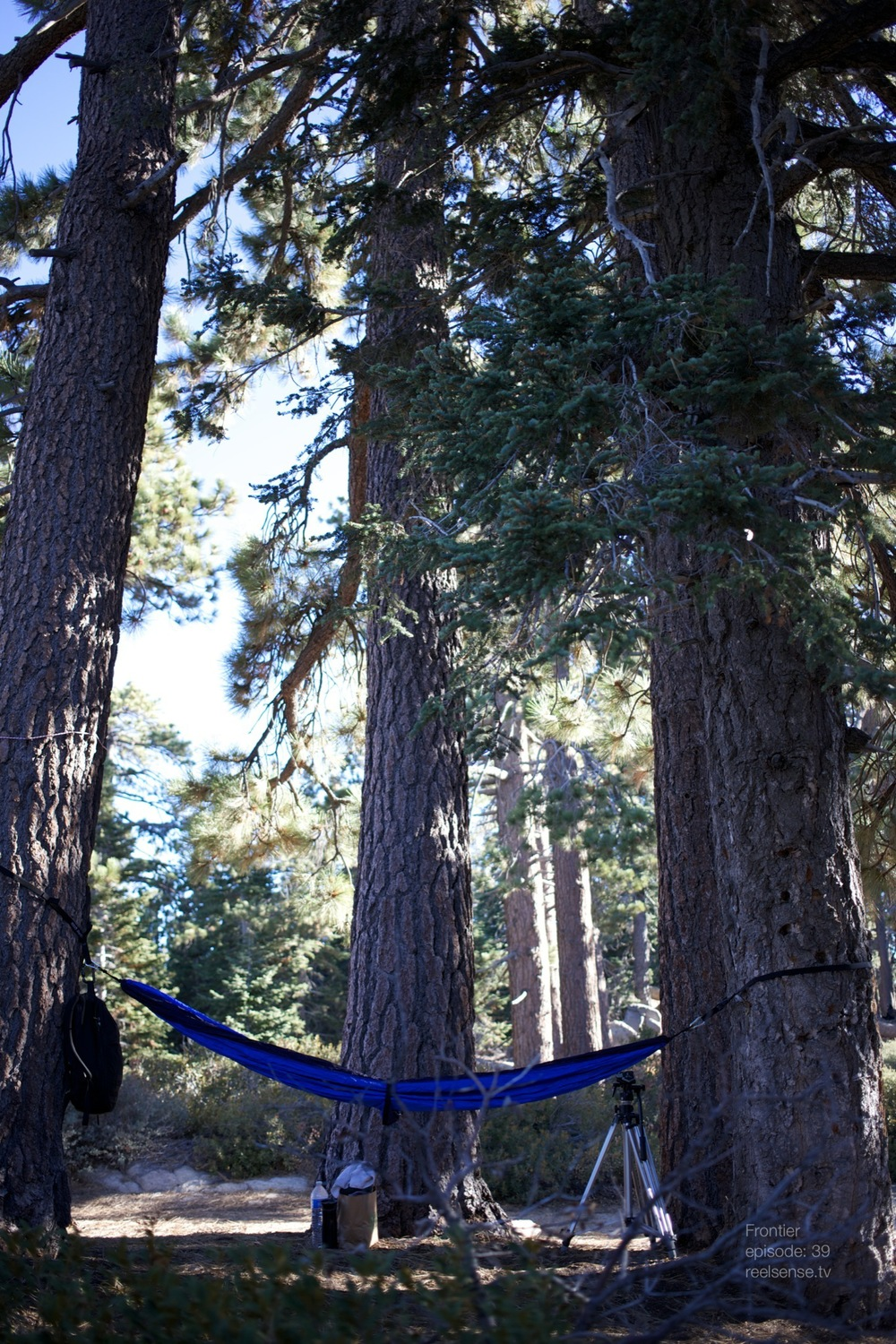 Big Bear, CA - Hammock in the Forest