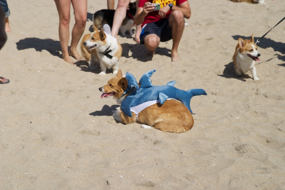 Huntington Dog Beach - Corgi Day 2013 Part 2