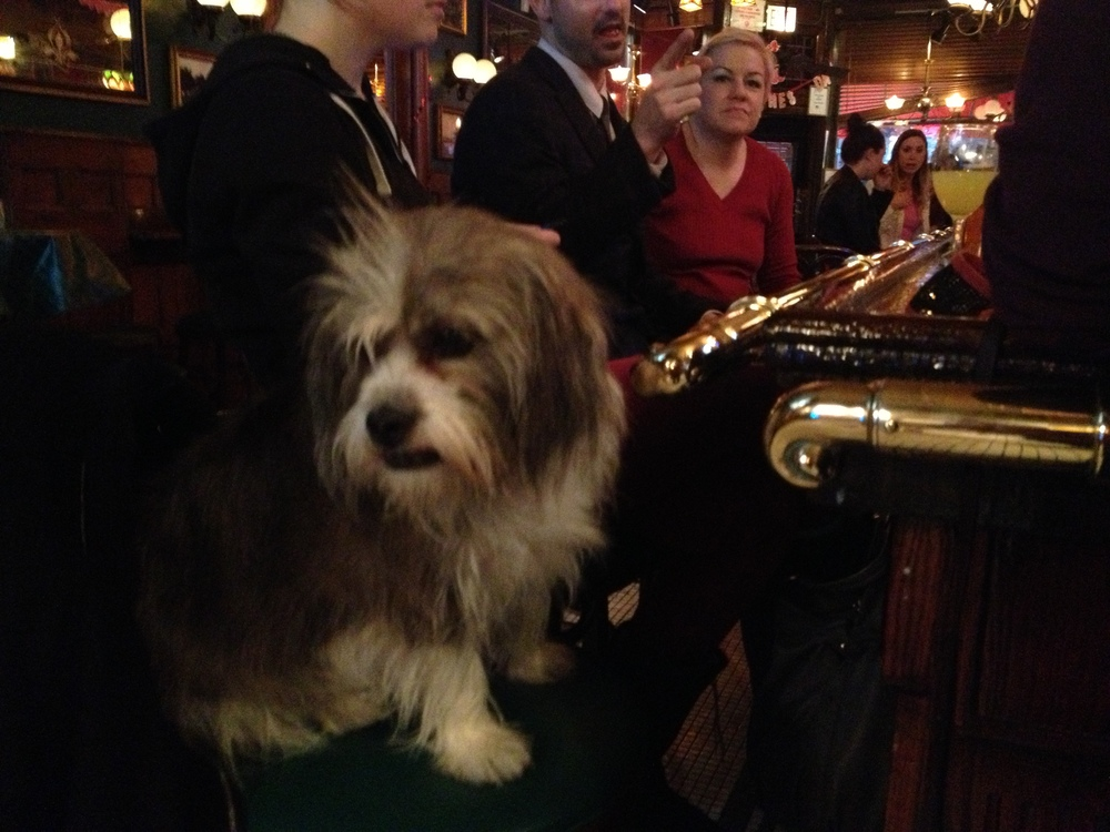 Just a dog hanging out at the bar...