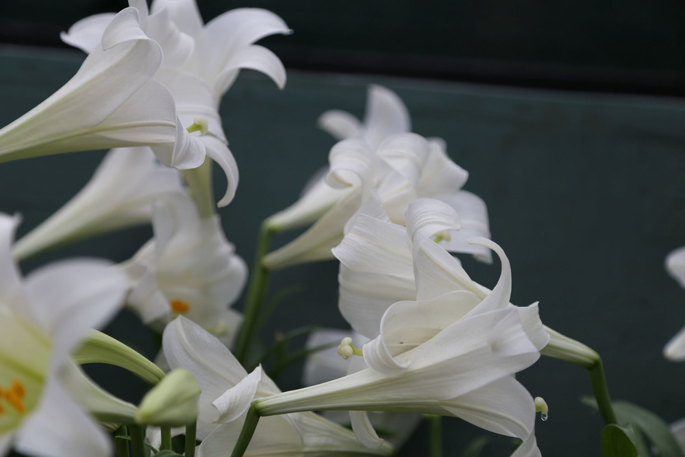 Dramatic photo of these pretty flowers in the Show House!