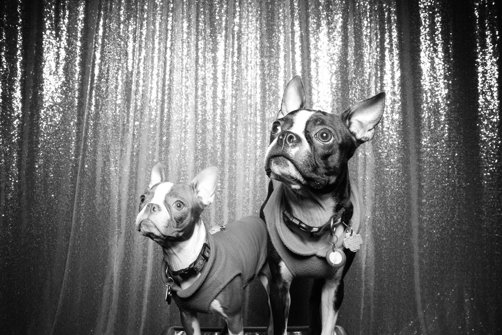 Dog_Friendly_Photo_Booth_Chicago_04.jpg